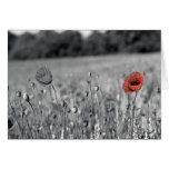 amapola roja en un campo blanco y negro felicitacion