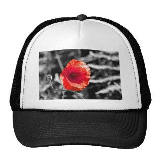 Amapola roja gorras de camionero