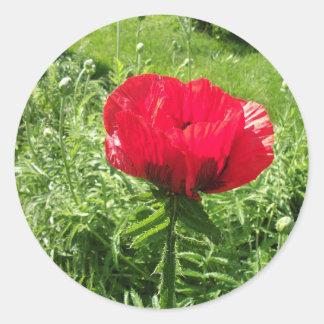 Amapola roja hermosa pegatina redonda