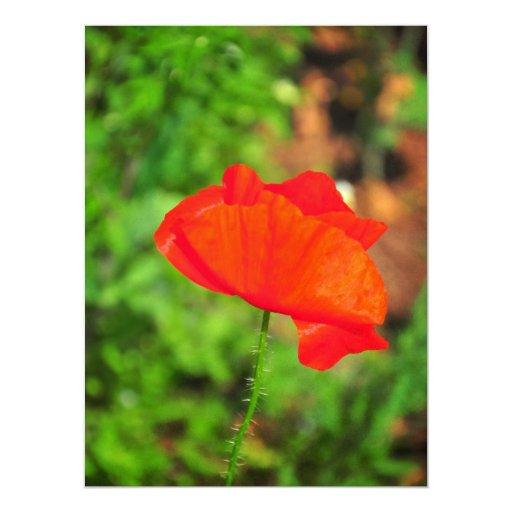 Amapola roja invitación 16,5 x 22,2 cm