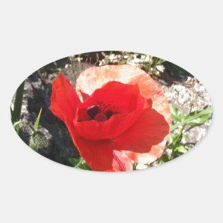 Amapola roja pegatina ovalada