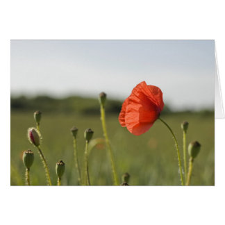 Amapola roja tarjeta de felicitación