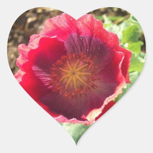 Amapola roja viva pegatina en forma de corazón