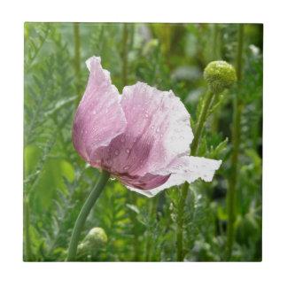 Amapola rosada dulce con las gotas de agua azulejo cuadrado pequeño