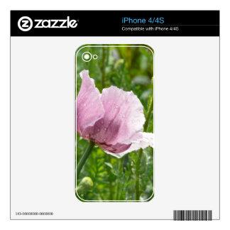 Amapola rosada dulce con las gotas de agua iPhone 4S calcomanía