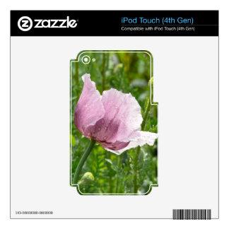 Amapola rosada dulce con las gotas de agua iPod touch 4G calcomanías