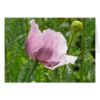 Amapola rosada dulce con las gotas de agua tarjeta de felicitación