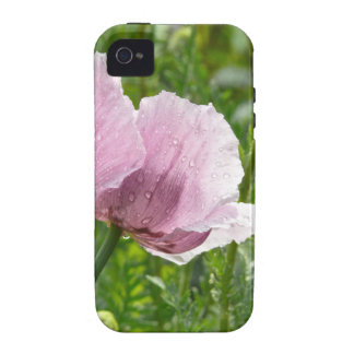 Amapola rosada dulce con las gotas de agua vibe iPhone 4 carcasas