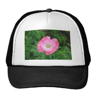 Amapola rosada gorras