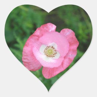Amapola rosada pegatina en forma de corazón