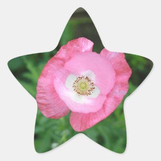 Amapola rosada pegatina en forma de estrella
