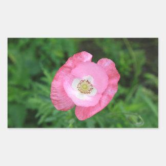 Amapola rosada pegatina rectangular