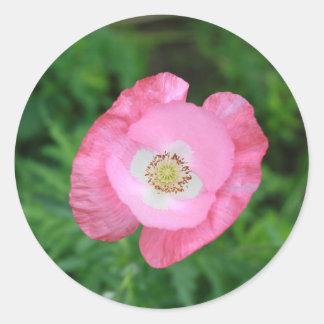 Amapola rosada pegatina redonda