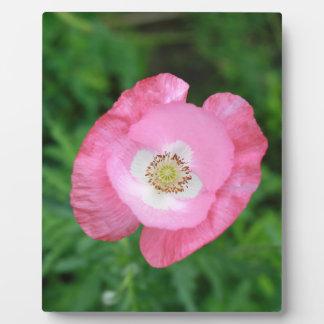 Amapola rosada placa