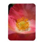 Amapola rosada polvorienta imán rectangular