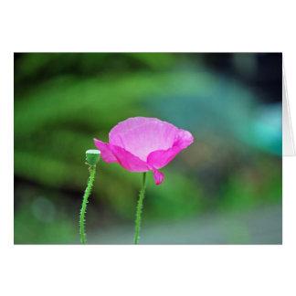 Amapola rosada tarjeta de felicitación