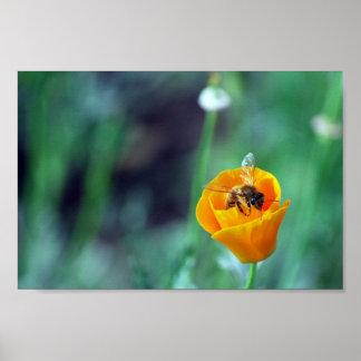 Amapola y abeja póster