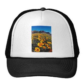 amapolas amarillas, nacional Monumen del cactus de Gorras