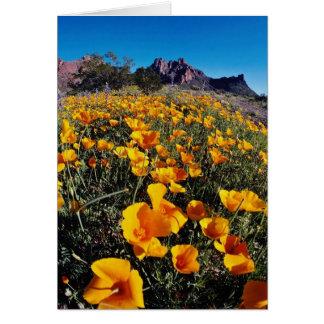 amapolas amarillas, nacional Monumen del cactus de Tarjeta De Felicitación