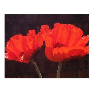 Amapolas anaranjadas brillantes postal