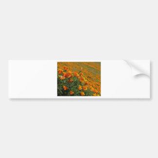 Amapolas anaranjadas que soplan en el viento etiqueta de parachoque