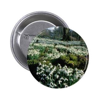 amapolas blancas que agarran las flores del sol pins