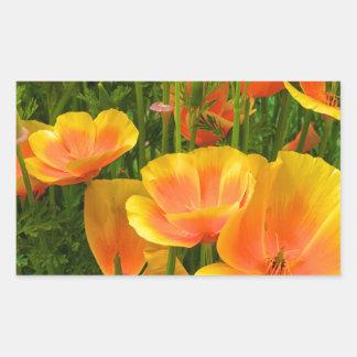 Amapolas de California anaranjadas/Kalifornischer Pegatina Rectangular