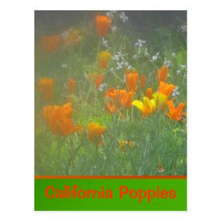 Amapolas de California anaranjadas Tarjetas Postales