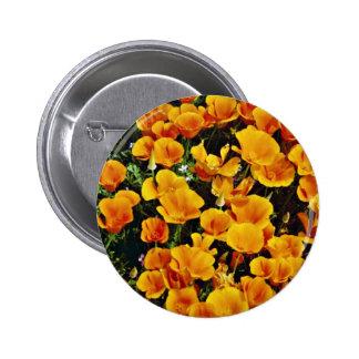 Amapolas de California en la floración, Lancaster, Pins