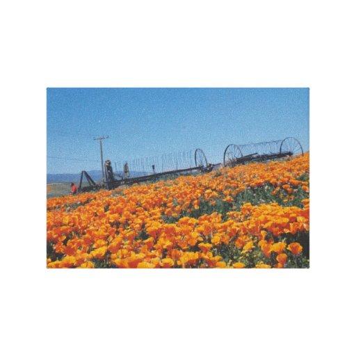 Amapolas de California Impresión En Lona