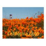 Amapolas de California y postal de la bandera amer