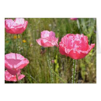 Amapolas de Islandia rosadas Tarjetón