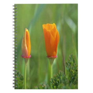 Amapolas de oro de California en un campo verde 2 Notebook