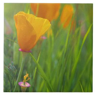 Amapolas de oro de California en un campo verde Azulejo Cuadrado Grande