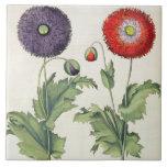 Amapolas: incarnato del multiplici del flore 1.Pap Azulejos
