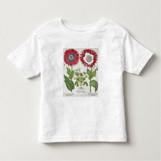 Amapolas ornamentales, del 'Hortus el Eystettensis Camisas