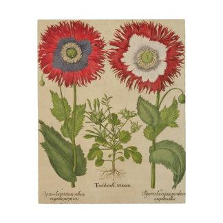 Amapolas ornamentales, del 'Hortus el Eystettensis Cuadro De Madera