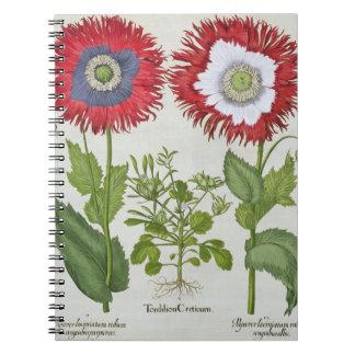 Amapolas ornamentales, del 'Hortus el Eystettensis Notebook