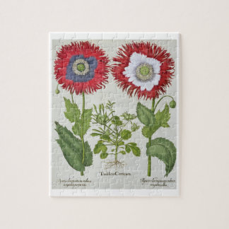 Amapolas ornamentales, del 'Hortus el Eystettensis Puzzle Con Fotos