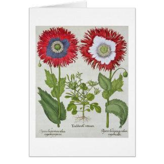 Amapolas ornamentales, del 'Hortus el Eystettensis Tarjeta De Felicitación