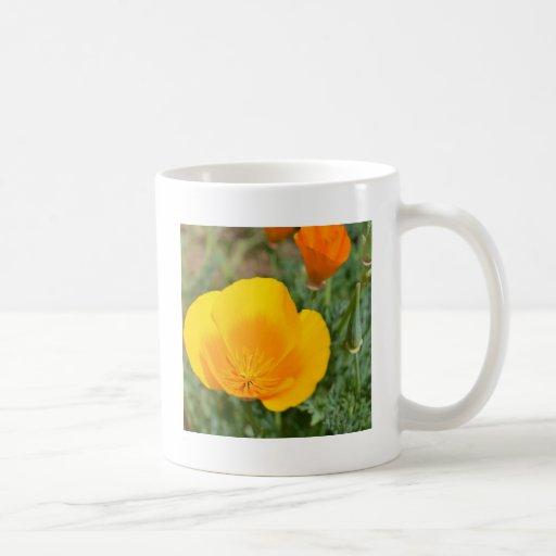 Amapolas populares taza