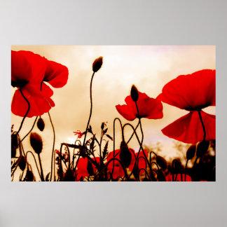 Amapolas rojas en la impresión del poster de la os