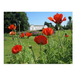Amapolas rojas en los jardines de Kew Postal