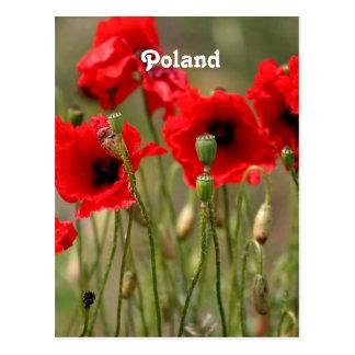 Amapolas rojas en Polonia Tarjetas Postales