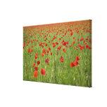 Amapolas rojas que florecen en campo impresion de lienzo