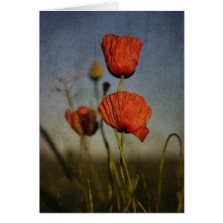 Amapolas rojas, tarjeta