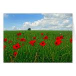 Amapolas rojas tarjeta de felicitación