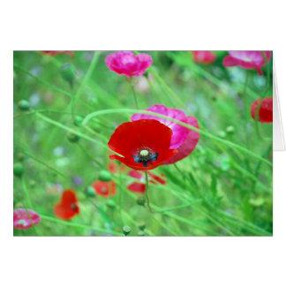 Amapolas rojas y rosadas tarjeta de felicitación
