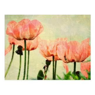 Amapolas rosadas y remolinos florales tarjetas postales