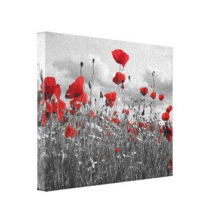 Amapolas salvajes en negro blanco y rojo lona envuelta para galerías
